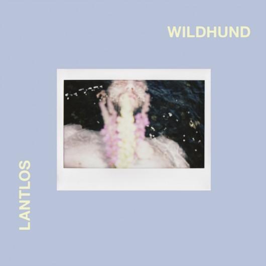 LANTLOS - Wildhund