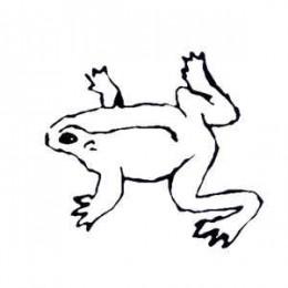 GRUNDIK + SLAVA - Frogs